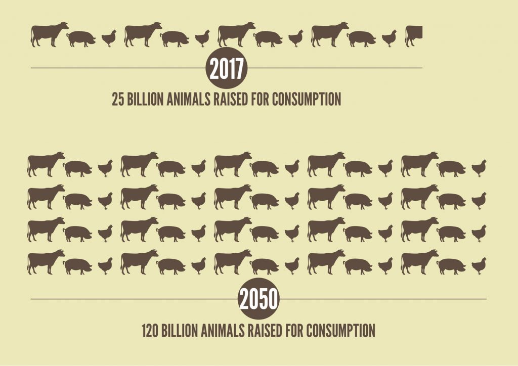 carne ENG-Animals-1024x724